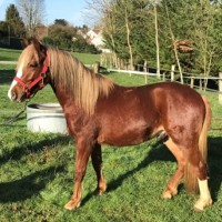 echange double poney PFS