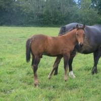 Instantane Rislois foal mâle