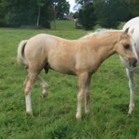 Instant t Rislois foal mâle